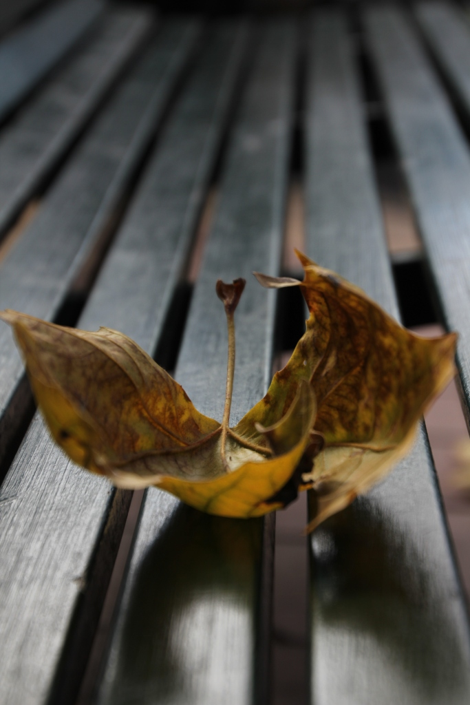 005-AUG15-Lonely Leaf