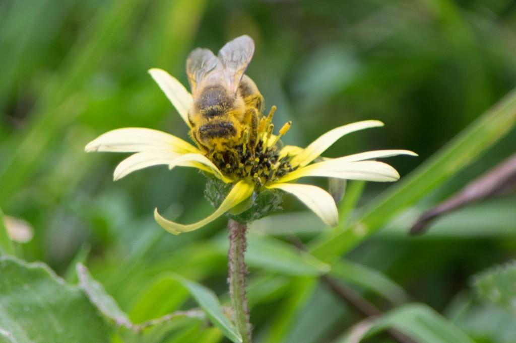 002-Sept15-Pollen