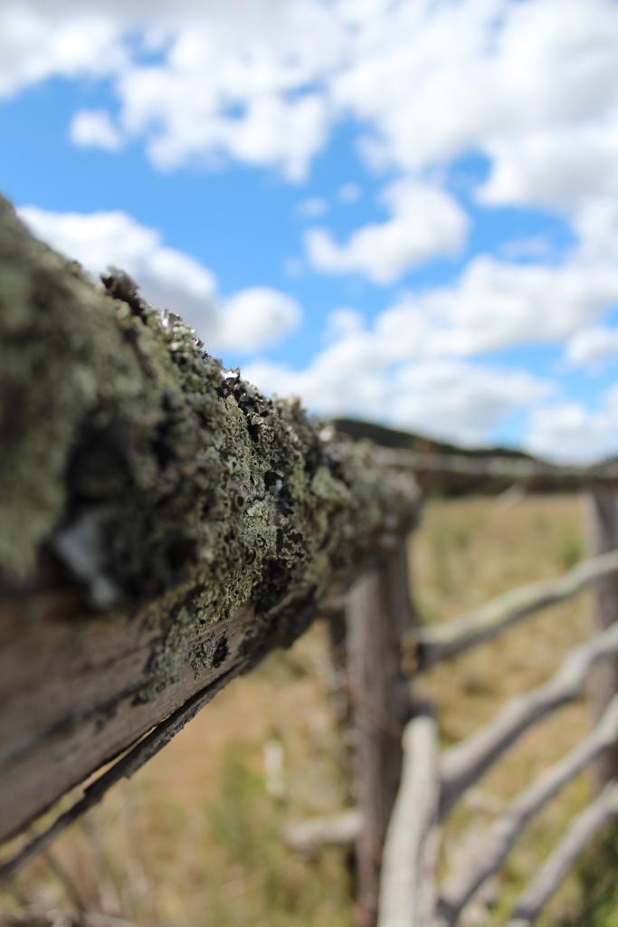 RudiB-Sept15-Mossy Boundaries