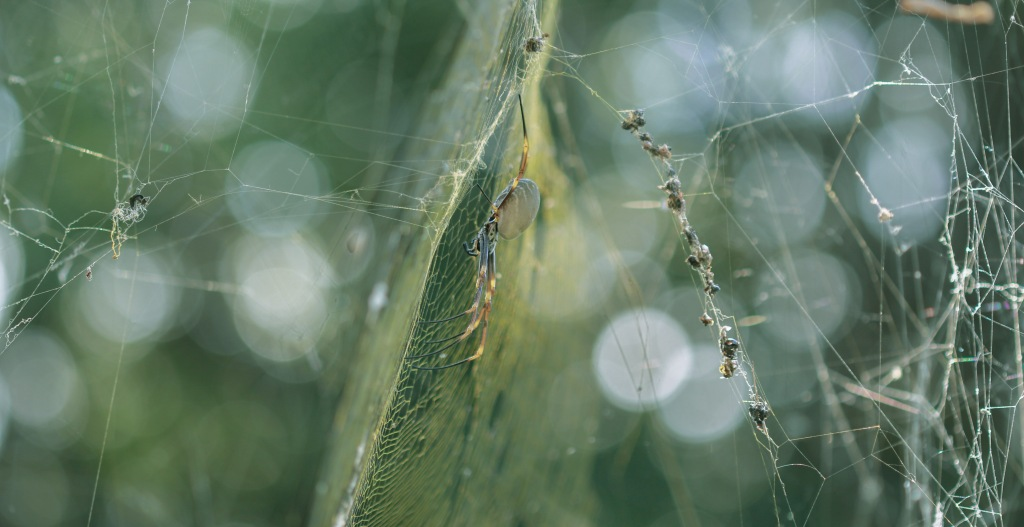 Bokeh Spider Tess Cholson (1 of 1)