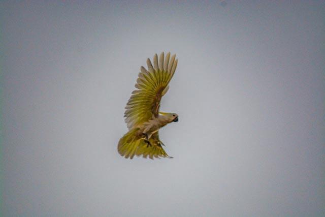 Donna-Mar16-Cocky