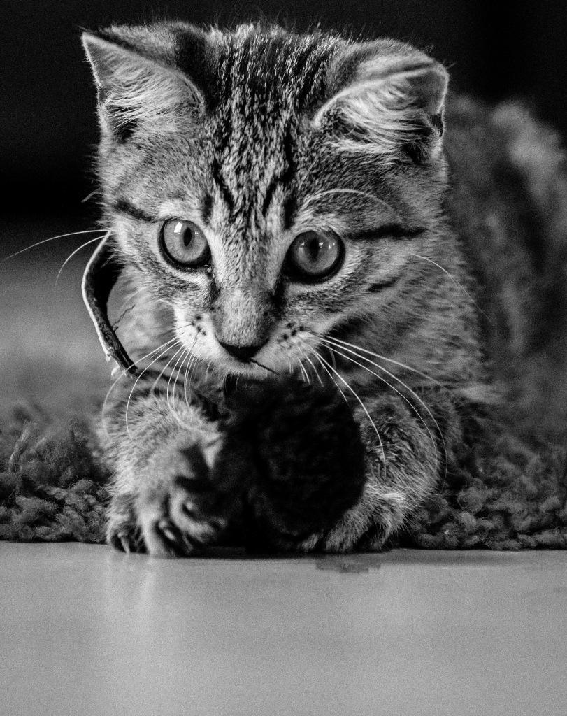 nickclark_sept16_cats-eyes