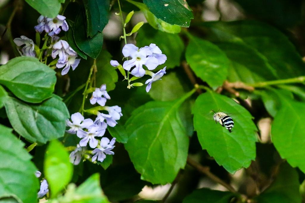 11-bee
