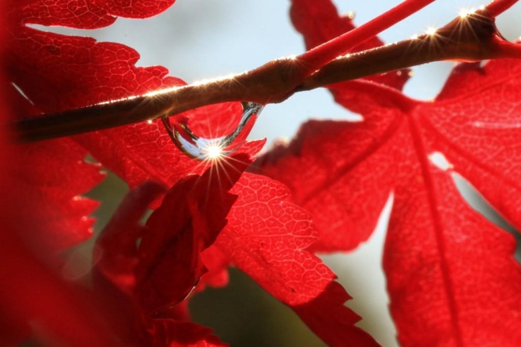 jodi_nov16_tears-from-a-leaf